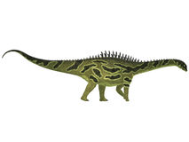 Augustinia on White. Agustinia is a sauropod from the Early Cretaceous Period of South America Stock Image