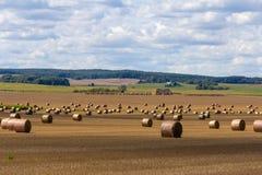 Augusto sui campo-cereali bielorussi già sono stati rimuovono immagini stock libere da diritti