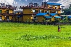 21 augustus, 2014 - Landbouwersvrouw in Pokhara, Nepal Royalty-vrije Stock Fotografie
