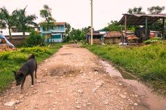 25 augustus, 2014 - Landelijke stad van Sauraha, Nepal Royalty-vrije Stock Afbeelding
