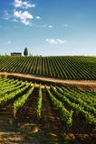 12 Augustus 2017: Mooie wijngaard en blauwe hemel in Chianti, Toscanië Royalty-vrije Stock Foto's