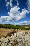 12 augustus 2017: steenmuur en een mooie wijngaard op achtergrond met blauwe hemel Gevestigd dichtbij San Donato Village Florence Stock Afbeeldingen
