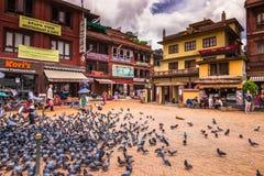 18 augustus, 2014 - Vogels in Boudhanath in Katmandu, Nepal Royalty-vrije Stock Afbeeldingen