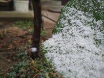 Aujourd'hui de la neige étrange est tombée du ciel Photo stock