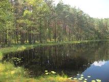 AukÅ-¡ taitija Nationalpark (Litauen) Stockfotografie
