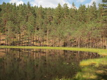 AukÅ-¡ taitija Nationalpark (Litauen) Lizenzfreie Stockfotos