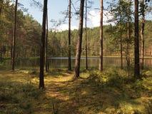 AukÅ ¡ taitija park narodowy (Lithuania) Obrazy Stock