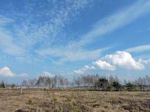 Aukstumales swamp, Lithuania Royalty Free Stock Image