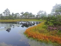 Aukstumalos swamp in autumn, Lithuania Royalty Free Stock Images