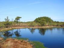 Aukstumalos swamp in spring , Lithuania Royalty Free Stock Photo