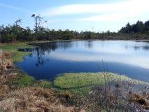 Aukstumalos swamp in spring , Lithuania Royalty Free Stock Photos