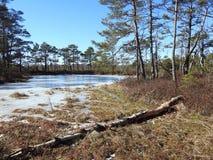Aukstumalos swamp in spring , Lithuania Stock Photos