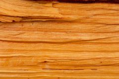 Aulne avec la couleur en bois orange naturelle photos stock