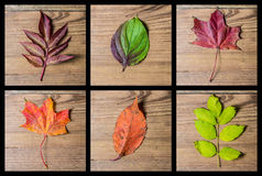 Aulumn colourful leaves background Royalty Free Stock Photos