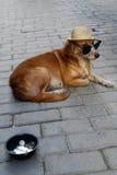 Aumône d'un chien de pauvres à La Havane photo stock