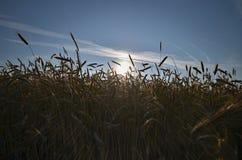 Aumentação Sun Foto de Stock