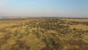 Aumentando su sopra un piccolo boschetto, i campi e le fienarole dei prati stock footage