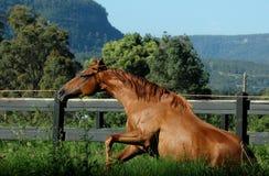 Aumentare del cavallo fotografie stock