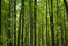 Aumentare verde degli alberi fotografie stock