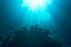 Aumento del sole e del banco di pesci Fotografia Stock