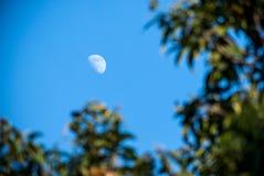 Aumento della luna con la priorità alta dell'albero Immagine Stock Libera da Diritti