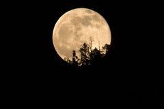 Aumento della luna piena Immagine Stock