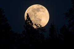 Aumento della luna piena Fotografia Stock Libera da Diritti