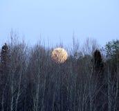 Aumento della luna piena Immagine Stock Libera da Diritti