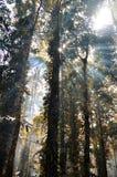 Aumento di Sun della foresta pluviale Immagini Stock