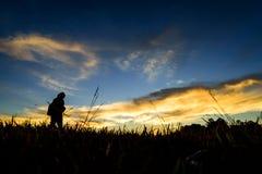 Aumento di Sun nel legno fotografia stock libera da diritti