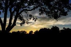 Aumento di Sun nella foresta alla mattina Immagini Stock