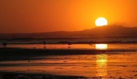Aumento dorato di Sun a bassa marea con le riflessioni dorate Fotografie Stock Libere da Diritti