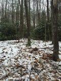 Aumento nella foresta Fotografie Stock