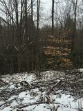 Aumento nella foresta Fotografia Stock Libera da Diritti