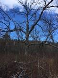 Aumento nella foresta Fotografie Stock Libere da Diritti
