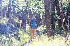 Aumento nella foresta immagini stock libere da diritti
