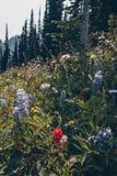 Aumento scenico di estate di Kootnenay Fotografia Stock