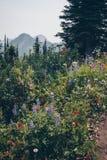 Aumento scenico di estate di Kootnenay Fotografie Stock Libere da Diritti