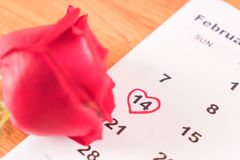 aumentou no calendário com a data da Dinamarca do Valentim do 14 de fevereiro Fotografia de Stock