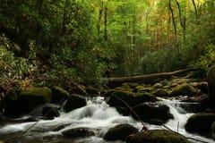Auntumn börjar i den stora nationalparken för det rökiga berget på rytande vatten för slingan för gaffelmotornaturen Arkivfoton