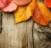aunumn在木头的背景叶子 免版税图库摄影