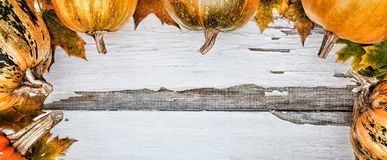 aunumn背景留给在寂静的感恩的生活木 在白色木背景的南瓜 文本的空位 在视图之上 免版税库存图片