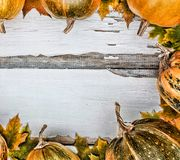 aunumn背景留给在寂静的感恩的生活木 在白色木背景的南瓜 文本的空位 在视图之上 图库摄影