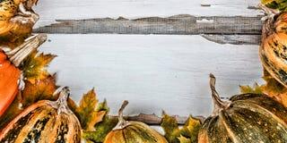 aunumn背景留给在寂静的感恩的生活木 在白色木背景的南瓜 文本的空位 在视图之上 免版税库存照片