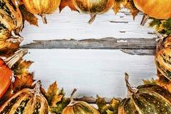 aunumn背景留给在寂静的感恩的生活木 在白色木背景的南瓜 文本的空位 库存图片