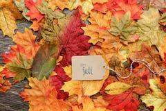 aunumnbakgrund låter vara livstid över still tacksägelse trä Royaltyfri Fotografi