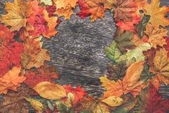 aunumnbakgrund låter vara livstid över still tacksägelse trä Arkivbild