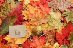 aunumnbakgrund låter vara livstid över still tacksägelse trä Royaltyfria Bilder