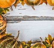 aunumnbakgrund låter vara livstid över still tacksägelse trä Pumpor på en vit träbakgrund Fritt avstånd för text ovanför sikt royaltyfria foton