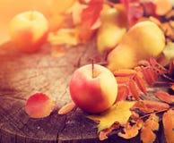 aunumnbakgrund låter vara livstid över still tacksägelse trä Sidor, äpplen och päron för höst färgrika arkivbild